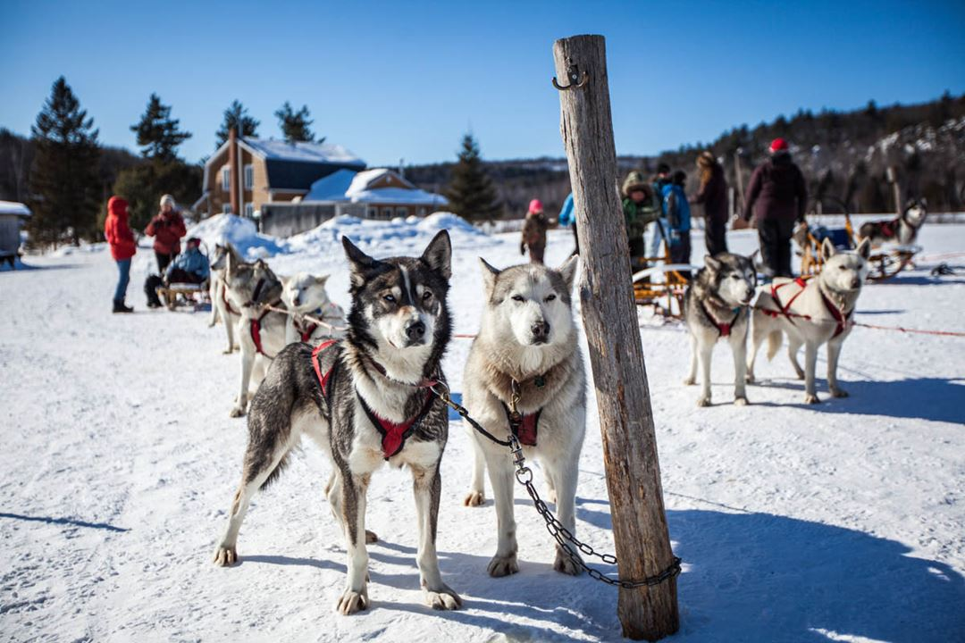 8919-Kinadapt-chiens2